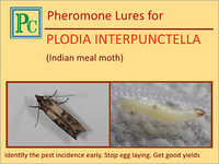 Plodia Interpunctella Pheromone Lures