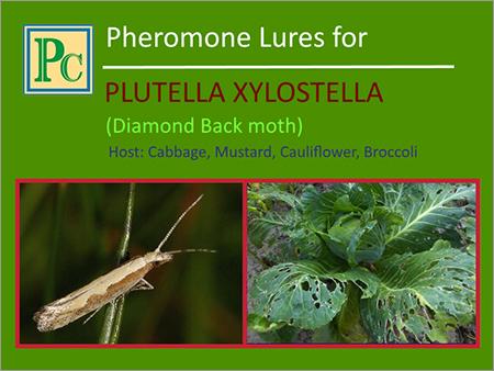 Plutella Xylostella Pheromone Lures
