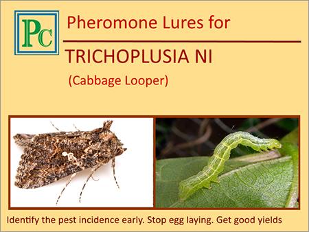 Trichoplusia Ni Pheromone Lures