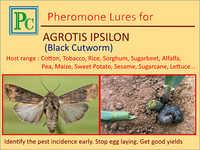 Agrotis Ipsilon Pheromone Lures