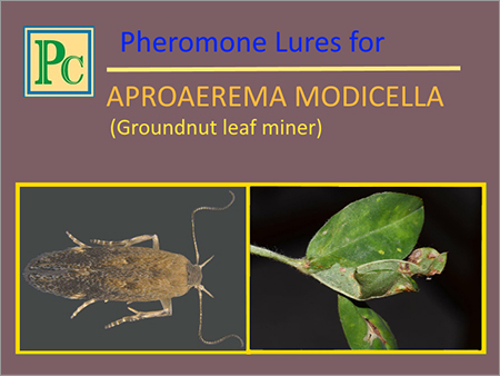 Aproaerema Modicella Pheromone Lures