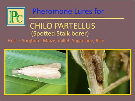 Chilo Partellus Pheromone Lures