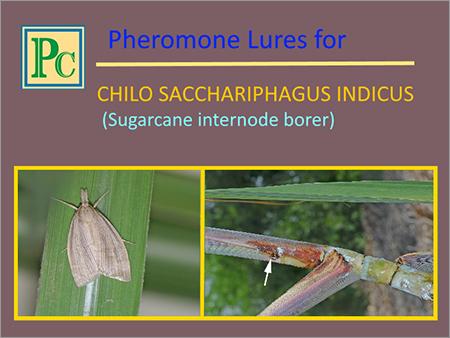 Chilo Sacchariphagus Indicus Pheromone Lures