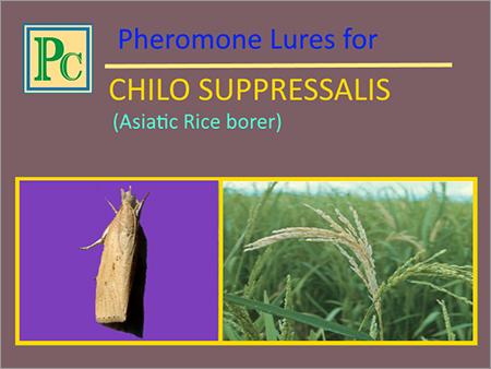 Pheromone Lures for Chilo Suppressalis