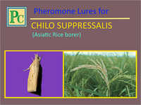 Pheromone Lures for Chilo Suppressalis