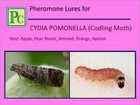 Cydia Pomonella Pheromone Lures