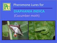 Diaphania Indica Pheromone Lures