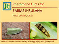 Pheromone Lures for Earias Insulana