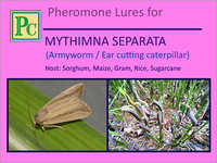 Pheromone Lures for Mythimna Separata