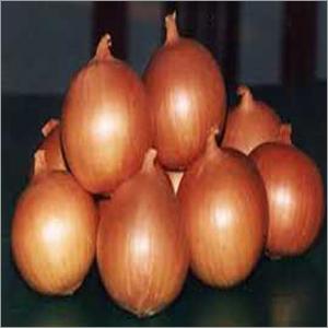 Onion Fertilizer