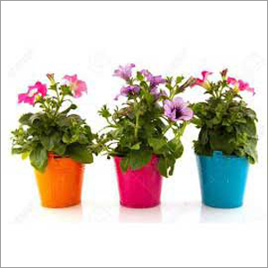 Garden Care Organic Fertilizer