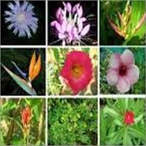 Flower Plants Fertilizer