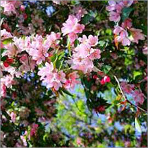 Flowering Trees Fertilizer
