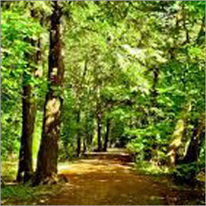 Forest Trees Fertilizer