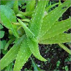Medicinal Plants Fertilizer