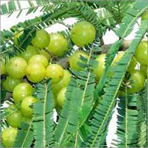Medicinal Trees Fertilizer