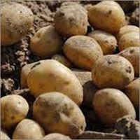 Rhizome Crop Fertilizer