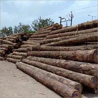 Meranti Logs