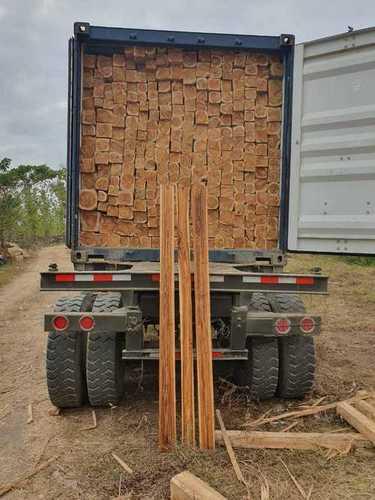 Panama Teak Logs