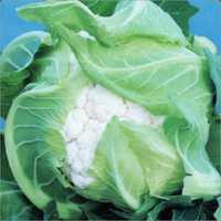 Cauliflower Durgesh