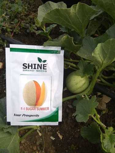 Muskmelon Seeds - f1 sugar summar