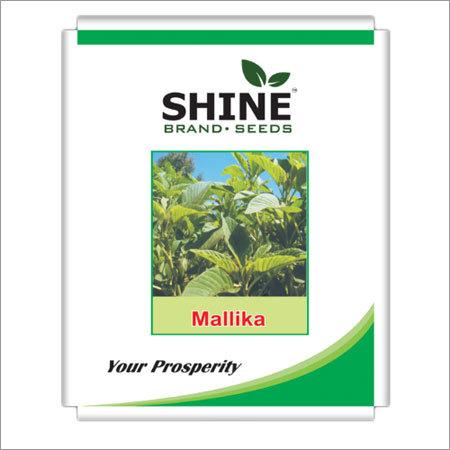 Amaranthus (Green) - Malika Seed