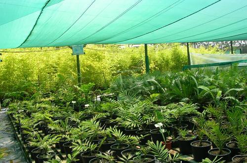 PLANT NURSERY SHADE NET