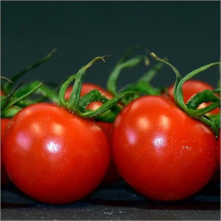 Tomato Suppliers, Fresh Tomato Exporters, Wholesalers
