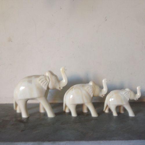 camel bone elephant