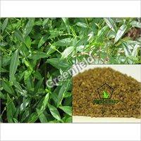 Kalmegh Seeds Andrographis Paniculata