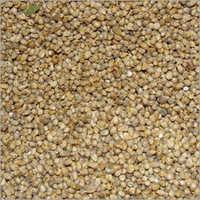 Green Millet Bajra