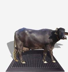 Buffalo Mats