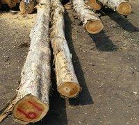 Costa Rica Teak Logs