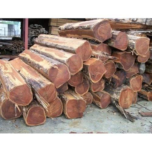 Rough square Teak Logs