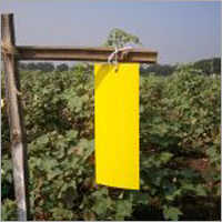 Yellow Fruit Fly Trap
