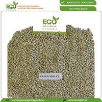 Green Millet (Bajara)
