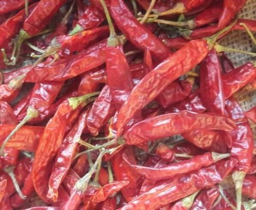 S10 Sannam Red Chilli