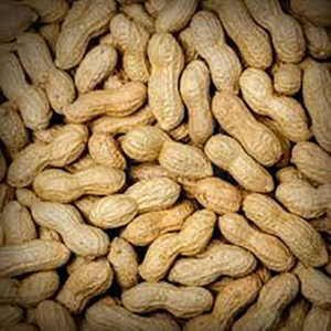 Peanuts in shell Bold