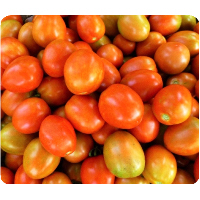 Tomato Dried Seeds