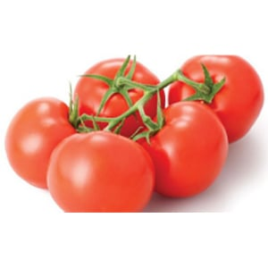 Tomato Plant Seeds