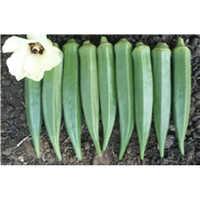 Okra Hybrid Dried Seeds
