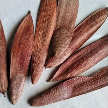 Anjan Tree Seed