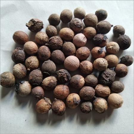 Sandal Tree Seed