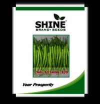 F1-Shine 820 Hybrid Chilli Seed