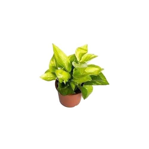 Artificial Plant Rental Services