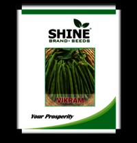 Bush Beans - Vikram Seed