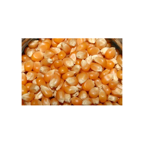 Dried Maize Seed