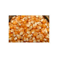 Dry Maize Seeds