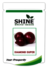 Diamond Super Onion Seed
