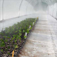 Humidification Systems For Greenhouse Purpose